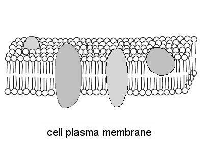 All Worksheets » Cell Membrane Coloring Worksheet Answers - Free ...
